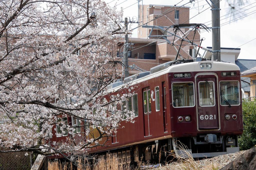 夙川公園(夙川河川敷緑地)の桜と阪急電車