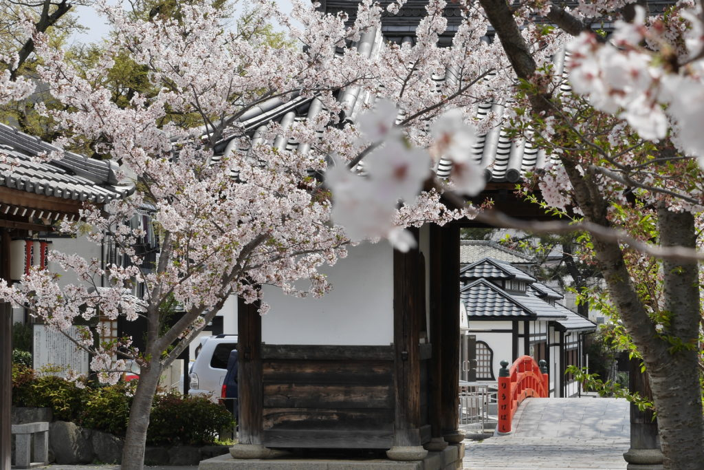 須磨寺(須磨寺公園)の桜